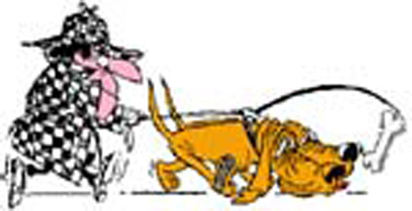 Radar chien de saint hubert de la gendarmerie